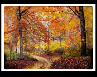 Trees, autumn, Soft Autumn rain, 5x7, Original, Signed, Fine Art Photograph, Fall decor, Home decor, nature photograph, Michigan