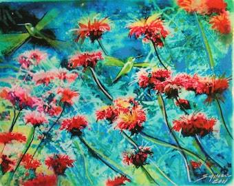 8x10, Hummingbirds nectar gathering, 2 of 10, Original Signed, Fine art photo mixed media, red flowers, blue decor, gardens, nature decor