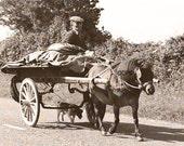 Irish Photography, Pony Dog Cart, Vintage Photograph, Sepia Style, Brown and Beige, Landscape Photo, 5 x 7 Print, Irish Decor, Wall Decor