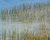 Landscape Photography Grass Photograph Water Photo Nature Rainbow Lake Florida Everglades Fine Art 5 x 7 Office Decor