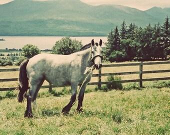 Irish Photograph, Ireland Decor, Killarney Lakes, Horse Photography, Teal And Green, Wall Decor, Vintage Style Photo, Landscape Print