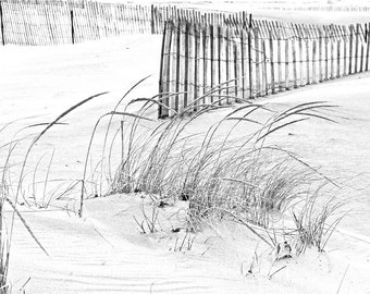 Beach Photograph, Black and White, Sand Dune Photo, Sand Fence, Lake Michigan, Lustre Paper, Fine Art Print, Landscape Photo, Wall Decor
