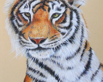 Penny's Curious Kitty Orig. Colored Pencil-Print
