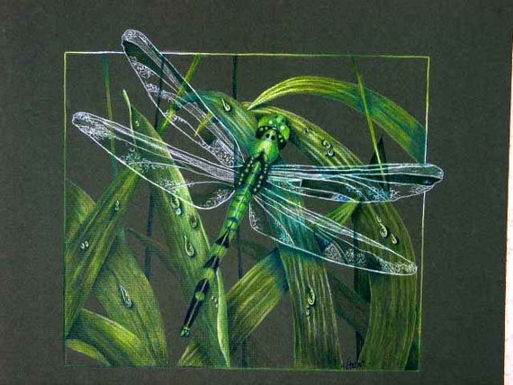 Shades of Green Dragonfly Colored Pencil