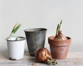 Vintage Planting Pots