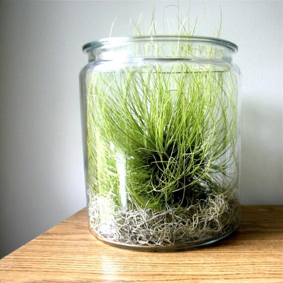 Vintage Glass Apothecary Jar or Terrarium....Large