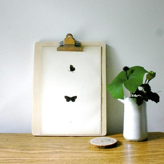 Antique Morris Butterfly Specimen Wood Block Print..... SMALL RINGLET