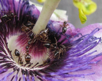 Party on the Passion Flower Photograph 5x7