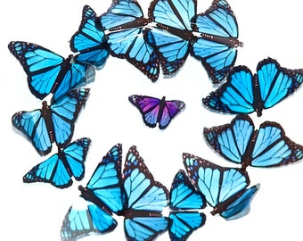 A transparent film butterfly picture