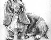 Basset Hound Original Drawing - Alisa Wilcher