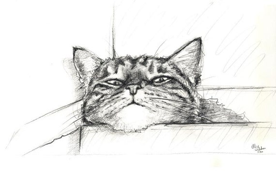 Charcoal Cat Drawing - Original Charcoal - Alisa Wilcher