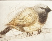 Black Throated Finch, Australian Bird, Hand Pulled Etching