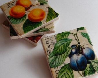 Coasters - Vintage Fruit & Postcard Script