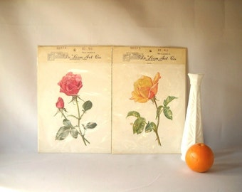 Vintage Prints Rose Prints De Leon Art Company Yellow Rose Red Rose Flower Garden
