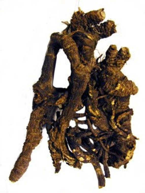 Osha Root  Herb for Smudge, Purity, Magic