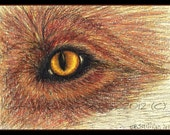 Fox Wildlife Art,  Eye, Illustration, Print