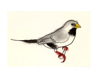 Bird art finch drawing -  Eric the Long Tailed Finch -  6 X 4 print