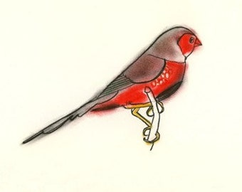 Finch drawing bird art - 4 for 3 SALE Crimson Finch -  6 X 4 print