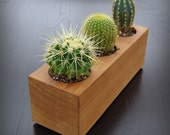 Modern Minimalist Succulent Planter in Reclaimed Cedar Wood