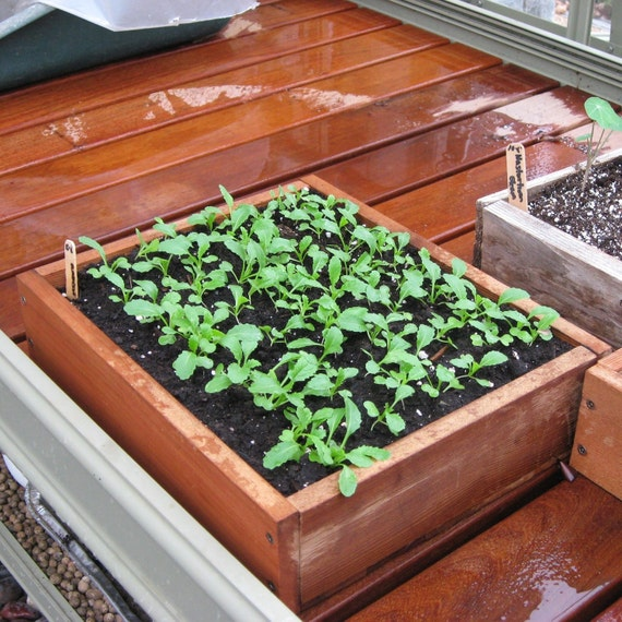 Medium Wooden Seed Starting Tray
