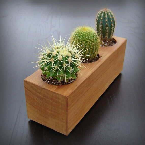 Modern Minimalist Succulent Planter in Reclaimed Cedar Wood