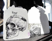 Digital Skull with Spider
