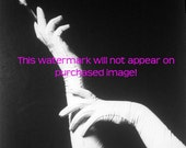 OLD Vintage SILHOUETTE WHITE Gloved HANDS Photo Reprint