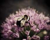 "Taking Care of Business -  close up print of working bee on a purple flower, 8x10"" (20x25cm) Fine Art Print"