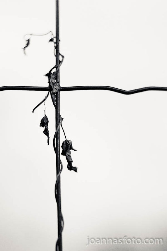 """Entwined - dry branch interlaced with wire fence- 8x12"""" (20x30cm) fine art print"""