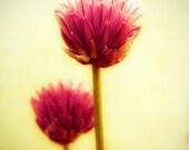 Kitchen decor, spring flower, flower photography, honeysuckle pink, Allium, chive, food photo, edible, honey gold, amber