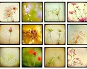 Flower photos, nature photography, art collection, set of floral prints, home decor, 5x5 prints, TTV, vintage style