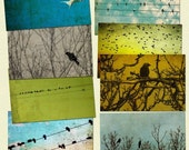 Bird photography,  nature photos, avian art, print collection, bird on a wire, tweet, birdies, black crow - 8 4x6 prints