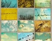 Bird prints, nature, feathers, wings, birds, home decor, clouds, bird on wire, art collection, tweet, btrd art, print set, 8x10 photos