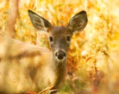 Deer photography nursery art nursery decor harvest gold yellow russet autumn fawn woodland baby animal print forest : All Ears 8x8