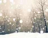 Snowflakes, falling snow, snow photography, snow photo, sepia photo, nature photo, bare trees, winter landscape, maple trees, winter snow