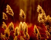 Burnt orange autumn photography woodland forest red earth tones russet harvest gold  - Edge of the Woods 8x10
