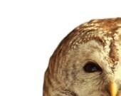 Barred owl photo, feathers, bird print, brown owl, wild animal print, woodland, yellow, canadian forest : Hoo Hoo Two 8x8