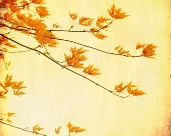 Maple leaves burnt orange harvest gold canada forest art rustic print wall decor autumn  - Autumn Gold 5x5