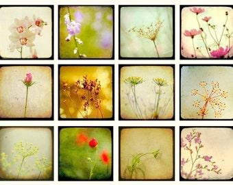 Flower photos, nature photography, art collection, set of floral prints, home decor, 5x5 prints, TTV, vintage style