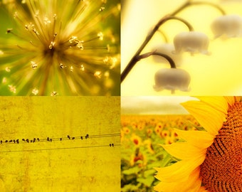 Yellow art, 4 photos, kitchen decor, mustard, nature photography, lemon, saffron, gold, flower print, birds Set of 4 5x7 Prints