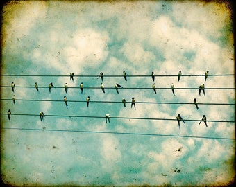 Bird Photography Birds on a wire feathers bird photo black and white swallows summer blue sky cream clouds tweet Flock 8x10