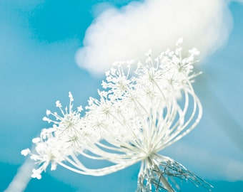 Summer flower cobalt blue aqua white summer decorating flower photography queen annes lace shabby chic - Up in the Air 8x8