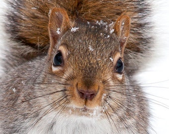 Squirrel photography whimsical art grey squirrel nature  animal, photo woodland snowflakes squirrel photo print nursery decor