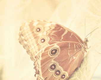 Butterfly photo shabby chic mocha nougat bamboo beige vintage inspired nature photography : Flutter 8x8