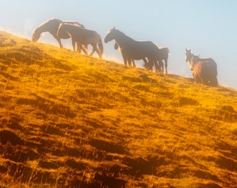 Nature photo, horse photography, wild horses, mountains, neutral colors, earthtones, rustic decor, mocha : Morning Light 8x10