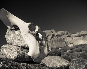 Southwest photography, rustic decor, bones, skeleton, natural history, man cave, tribal, wildlife photography, black and white