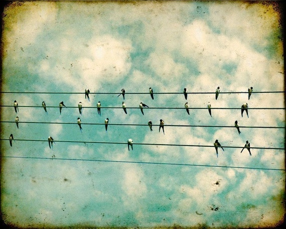 33% OFF, SPECIAL - Wall art, home decor, bird print, poster, birds on wires, blue, nature, large format - Flock 20x24