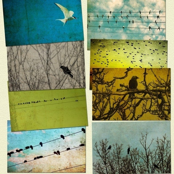 5x7 prints bird photography bird prints, crows, birds on a wire, nature photos, clouds, shabby chic, rustic