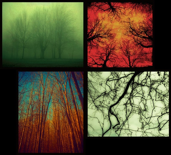 Autumn tree photography fall leaves Canadian forest tree art nature prints woodland art bare branches misty Set of 4 8x10 & 8x8