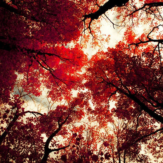 Ruby red photo autumn leaves fall art crimson forest scarlet canadian woodland holiday decor red accent - Redrum 8x8